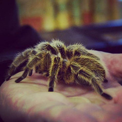 Whose afraid of the big #fluffy #spider _ A brave member of the public #facesfears & holds India the