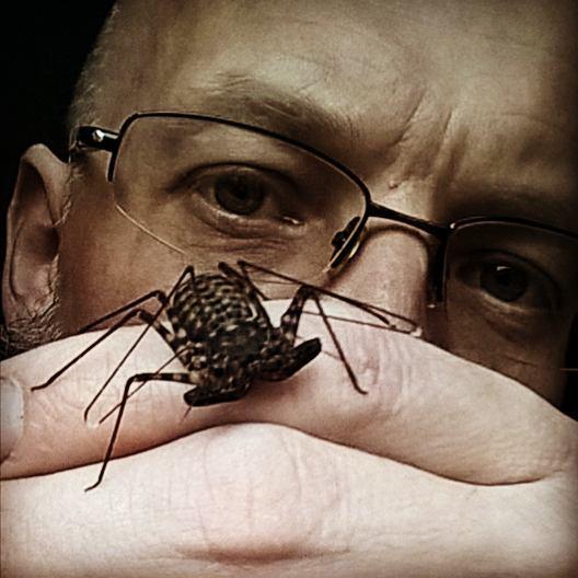 #damondiadema #arachnid #taillesswhipscorpion #tdw #tropicaldiscoveryworkshops #harrypotter