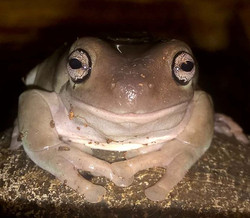 Hi, im #samaritan #frog.