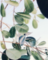 tumblr-inspiration_edited.png