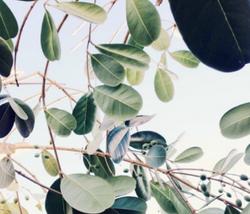 inspiring leaves