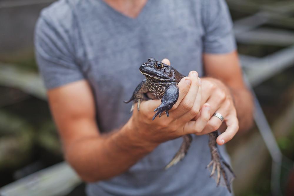 !ראו כמה קל להחזיק צפרדע