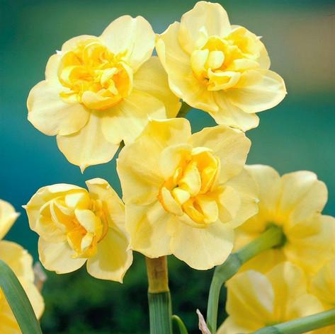 Yellow Cheerfulness