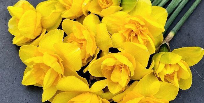 """Narcis """"Queens Day"""""""