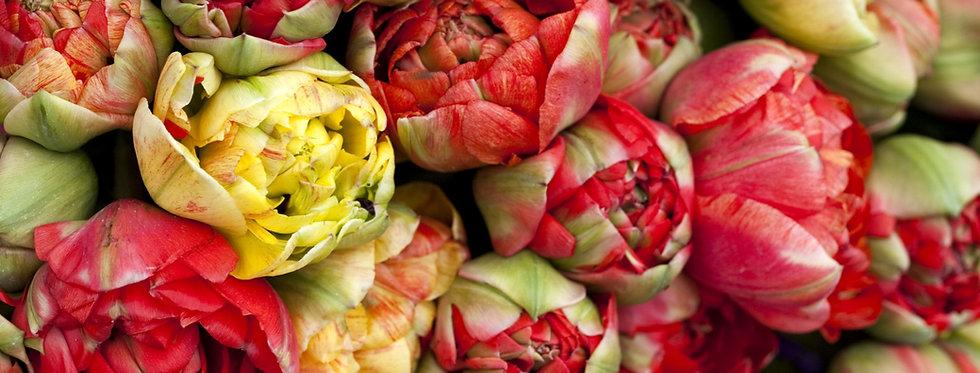 """Tulipán """"Gudoshnik Double"""""""