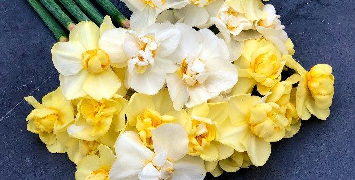 """Narcis """"Yellow Cheerfulness"""""""