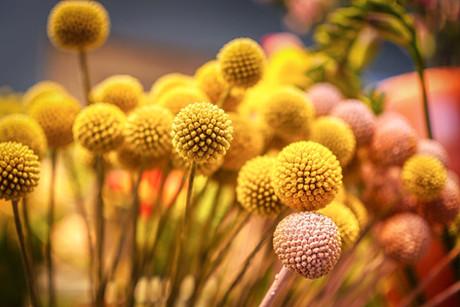 I toto je květina