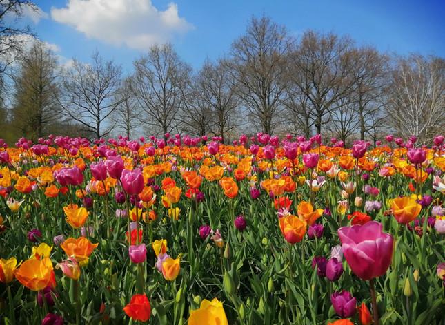 Jaro v Keukenhofu