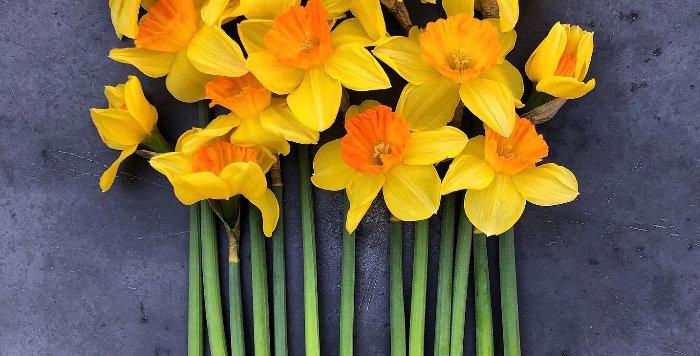 """Narcis """"Mary Bohannon"""""""