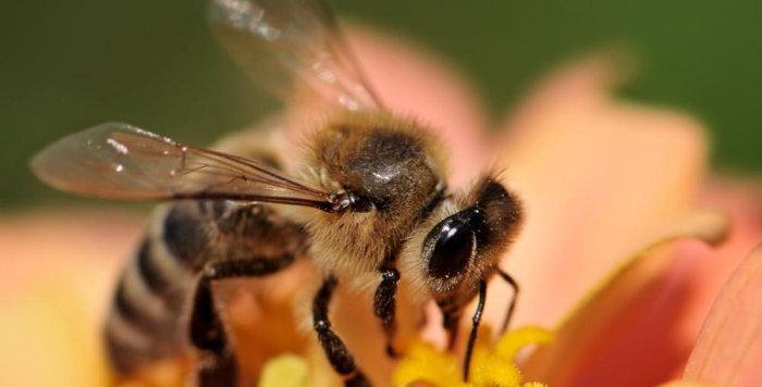 Zahrada pro včely