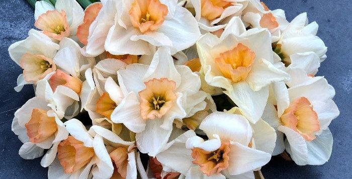 "Narcis ""Yazz"""