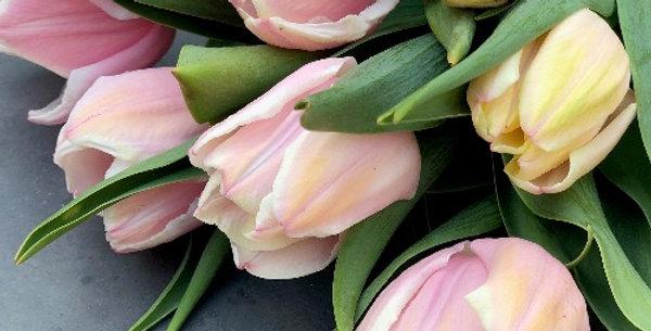 "Tulipán ""Mango Charm"""