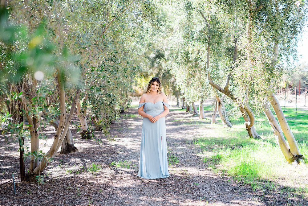 engagement photos in Olive trees with blue dress midday photoshoot