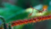 kadr140-2.jpg