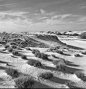 Open dunes img.jpg