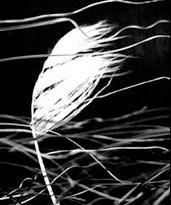 grassinwind.jpg