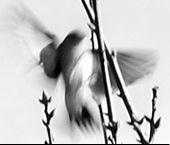dissolving bird img.jpg