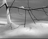 Beneath the Snow branch img.jpg