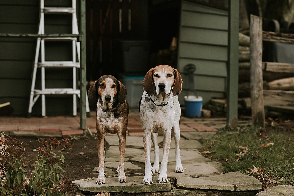 Two dogs standing outside