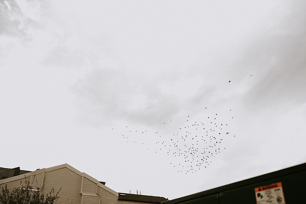 Birds flying over buildings