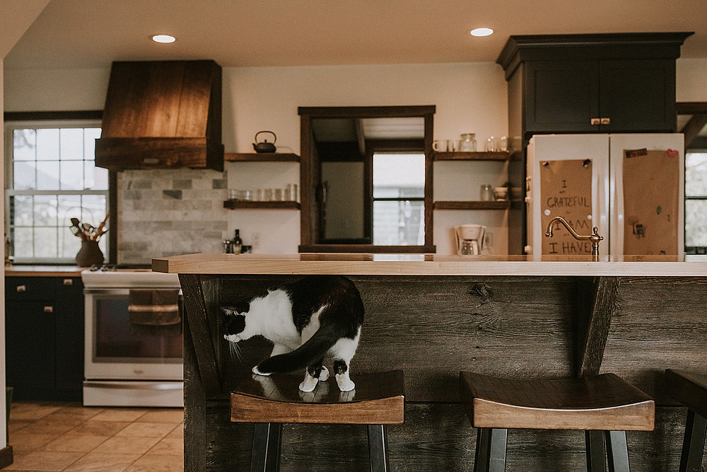 Cat in the kitchen on barstool