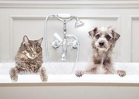 pets in tub iStock-603873904.jpg
