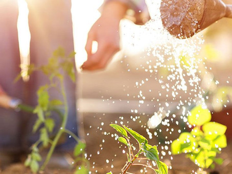 The One Critical Thing Home Gardeners Overlook