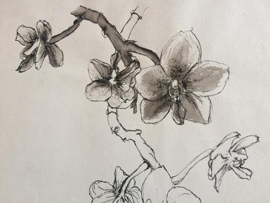 Orchideen (2009)