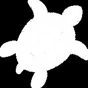 MackIslandSwim_turtle_white.png