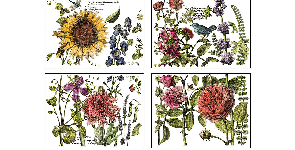 Botanists Journal 24x33