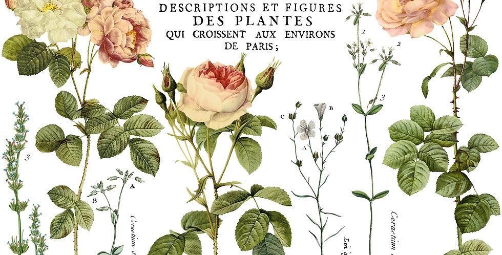 Flora Parisiensis (4) 12x16 sheets