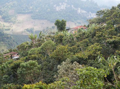 グアテマラ ラ・グラヴィレア農園/シティロースト 200g