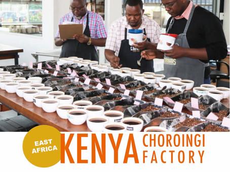 【NEW】ケニア チョロンギ・ファクトリー