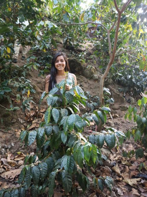 グアテマラ エスペランサ農園/シティロースト 200g