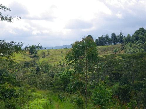 コロンビア サントゥアリオ農園/シティロースト 200g