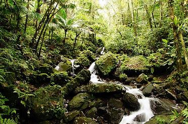 El-Yunque-Rain-Forest-002.jpeg