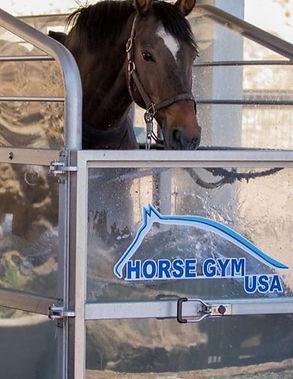 horse%20gym_edited.jpg