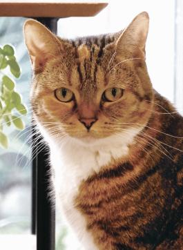 <20년 12월호> 일본어저널 행복을 주는 고양이 천국 '와라네코노야도'