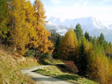bergen en bomen kleur.jpg