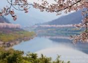 A Korean Spring?