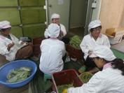 South Korea: Ground Zero for Food Sovereignty and Community Resilience