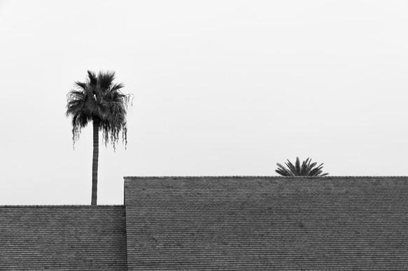 Phoenix-1.jpg