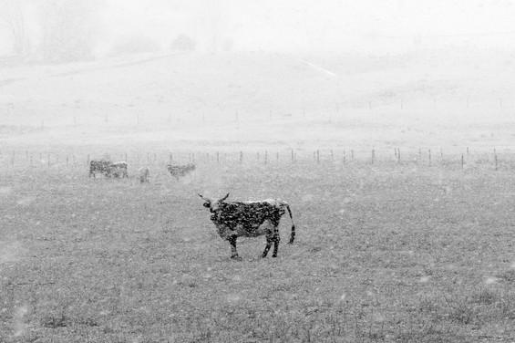 Montana-3-2.jpg