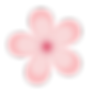 Pink-Flower.png