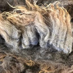 fernhill_fibre_blue_grey_lambs_romney_x_shetland_fleece