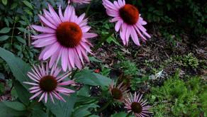 3 Herbs That Support Skin & Immunity