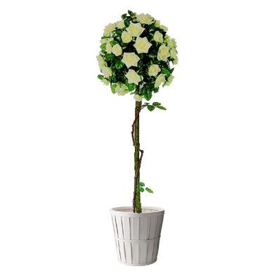 4ft Rose Tree