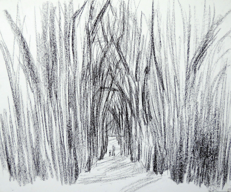 Birdsong Trail 1 (14x17, charcoal; 2013)