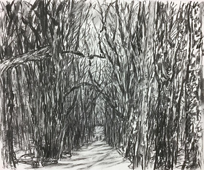 Birdsong Trail 5 (14x17, charcoal; 2013)