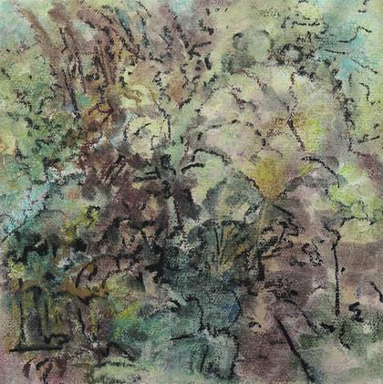 Pastel Gardens, Smoke Tree (12x12; 2019)